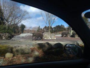 富士サファリパーク ゾウ