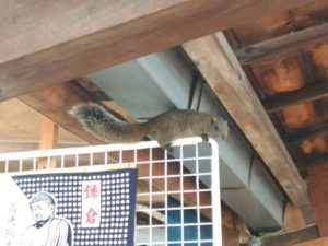 鎌倉 大仏 リス
